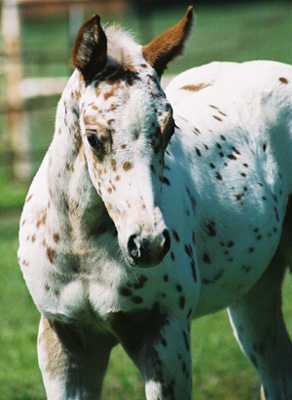 Gypsy, pictured March 22, 2003