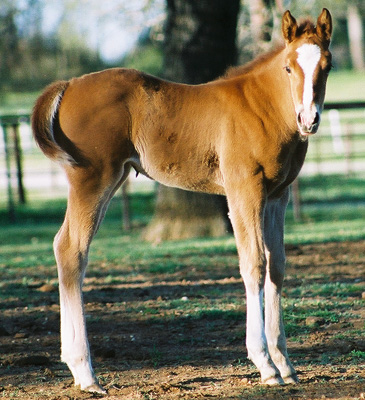 Invitational filly, pictured March 25, 2003