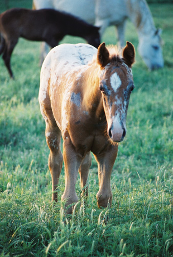 Charicature filly, pictured early May, 2004
