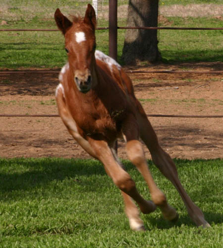 Invitational filly, pictured mid-March 2005