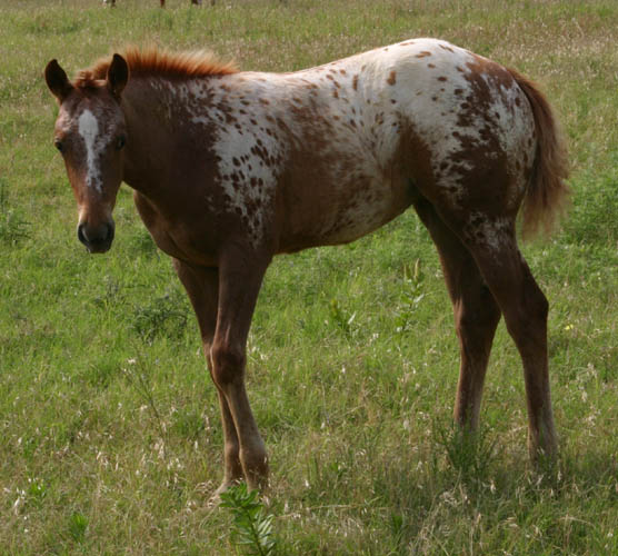 Charicature filly, pictured June 19, 2004
