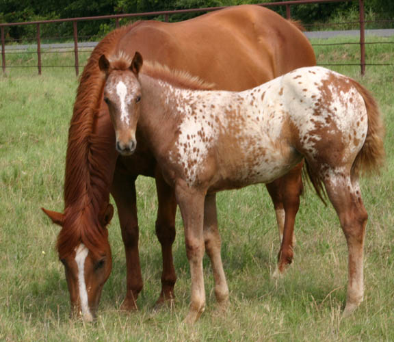 Charicature filly, pictured June 19, 2005