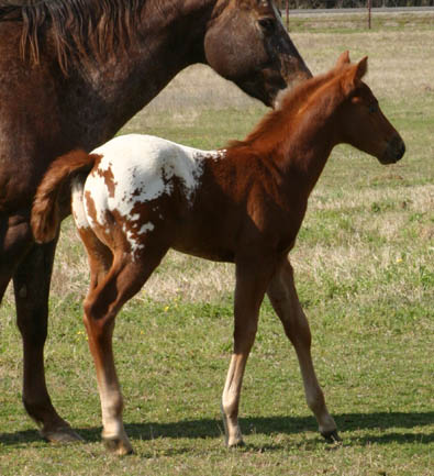 March Charicature Colt, pictured mid March 2005
