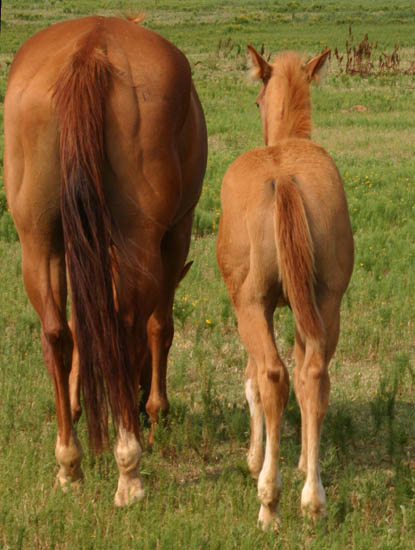Invitational colt, pictured mid-June 2005