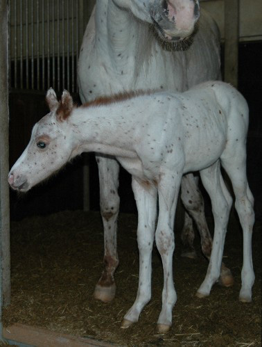 Invied Colt, pictured early March 2005