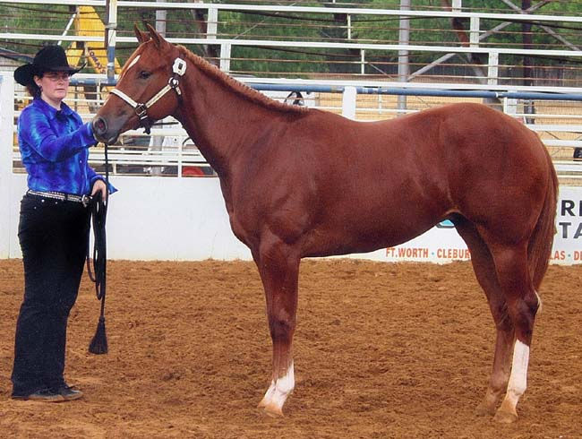 Longeline Futurity Winner, August 2006.  Owned and Shown by Lisa Salter.