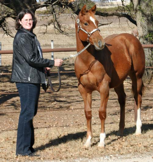 2005 Invitational colt, pictured early December 2005 with Lisa Salter