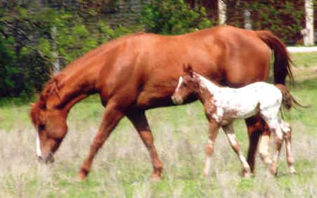 Charicature colt, pictured April 2, 2006