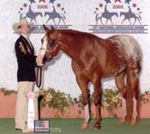 Robin Chouteau and Dreams Double Date, 2005 Worlds Showmanship Top 10