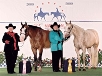 JP Fine N Dandy - Debbie Ryan, Bonanza Classy Cloud - Judy Rich, 2000 National Top 10