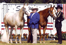 Bonanza Classy Cloud - Judy Rich, Designer Debutante - Sherri Tissing, Fort Myers FL 2001 successful race for National High Point