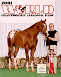 Invitational, Jackie Jackson, 2001 Reserve World Champion Hunter In Hand Stallions