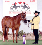 Designers Pride, Lisa Hauth, multiple World & National Top 10, 2002 National Champion Showmanship